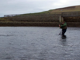 Seatrout from Finstown Brig photgraph by Jim Adams