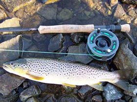Harray Brown Trout